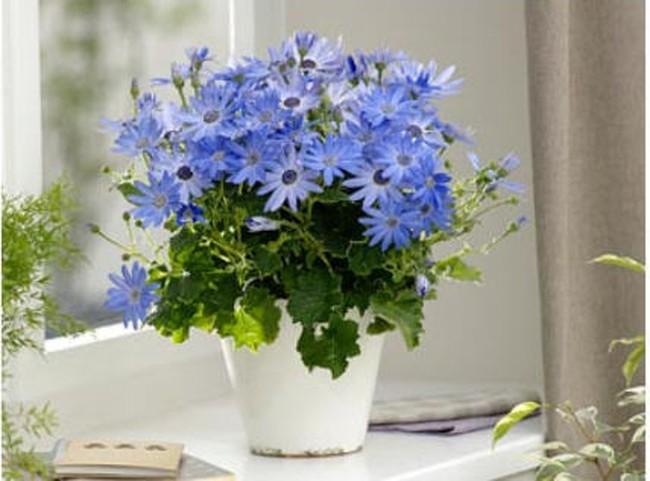 Làm duyên cho bệ cửa sổ với cây và hoa
