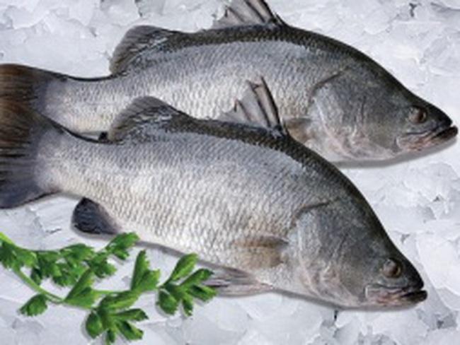Trung Quốc có nhu cầu mạnh với cá nước lợ và nước ngọt của Việt Nam