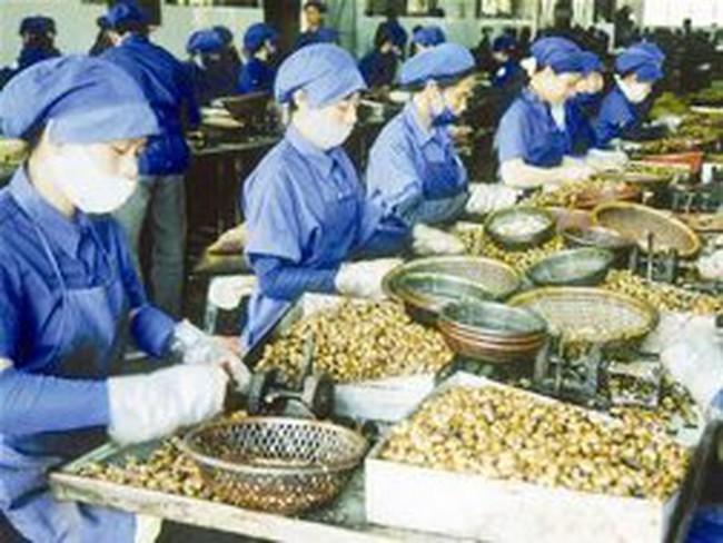 Giá điều nhân xuất khẩu tăng gần 300 USD/tấn