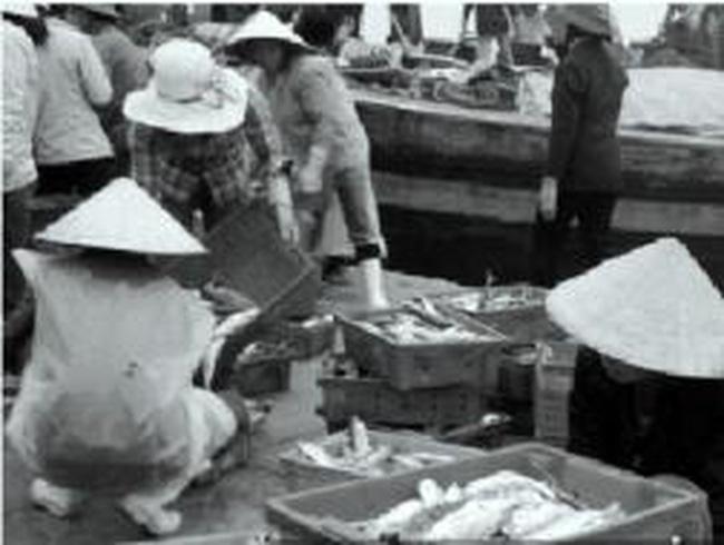 Ngư dân Nghệ An trúng đậm ngày đầu năm