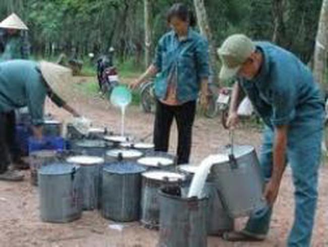 Tập đoàn Cao su Việt Nam đầu tư 24 dự án ở nước ngoài