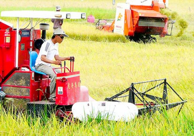 Đề nghị thu hồi quyền chuyển đổi mục đích sử dụng đất lúa của cấp tỉnh