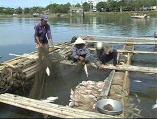 Cá chết trắng sông La Ngà
