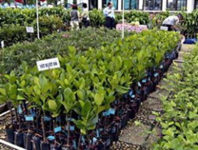 SSC: Vietnam Holding Limited thành cổ đông lớn