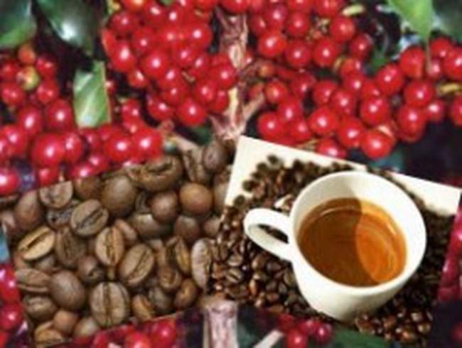 Lực mua mạnh, giá cà phê tăng 165 USD/tấn trong 4 ngày
