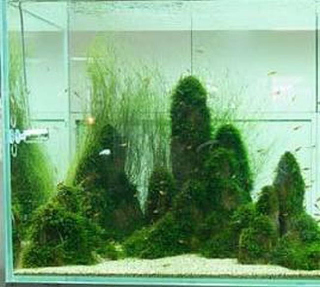 """Những """"khu vườn"""" thủy sinh tuyệt đẹp"""