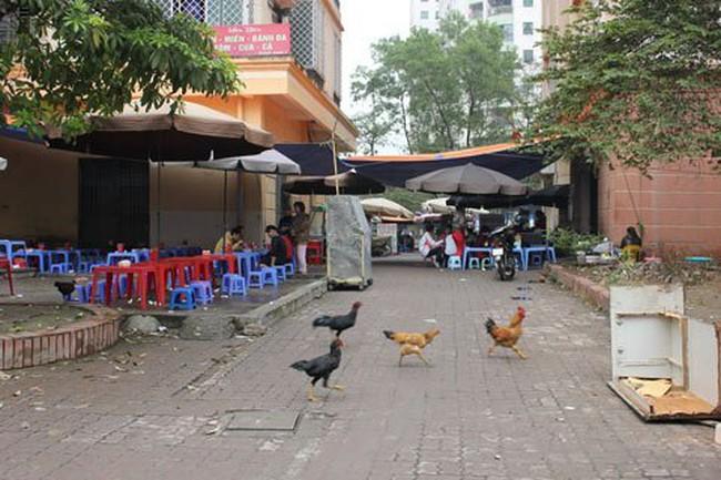 """Giữa lòng thủ đô tranh thủ nuôi gà ở """"làng"""" tái định cư"""