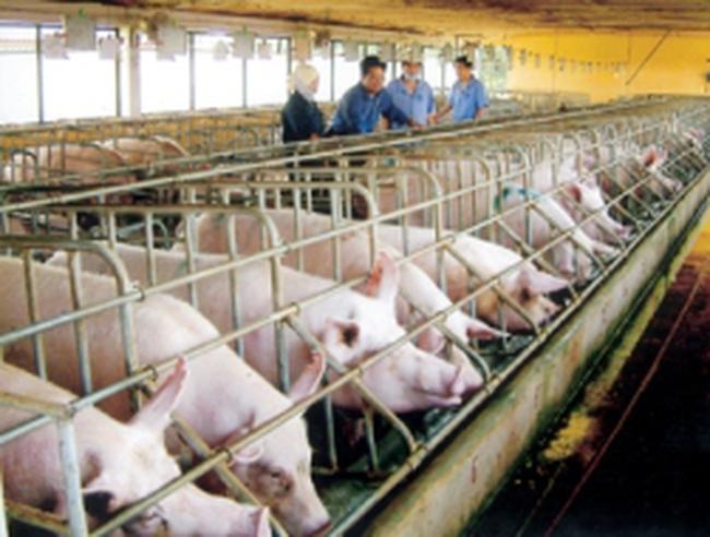 Bộ NN&PTNT: Sử dụng chất cấm trong chăn nuôi là tội ác