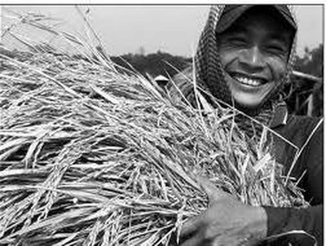 Trăn trở con đường từ lúa thành gạo