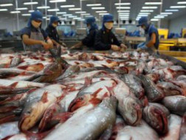 Vasep: Doanh nghiệp như Bianfishco là rất nhỏ, ngành cá tra vẫn hoạt động hiệu quả