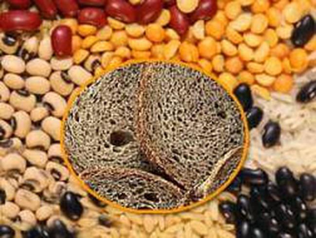 USDA: Dự trữ ngũ cốc thế giới đang sụt mạnh