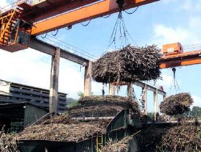 Sản xuất mía đường vụ 2011-2012 - nặng trĩu nỗi lo đầu ra