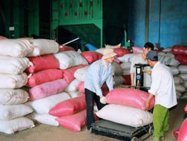 Nhiều doanh nghiệp cà phê Tây Nguyên đang hấp hối