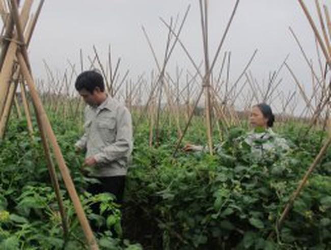 Vị đắng của nền nông nghiệp phụ thuộc
