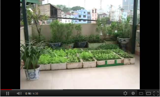 [Video] Tự túc thực phẩm - lựa chọn tối ưu để tự bảo vệ sức khỏe