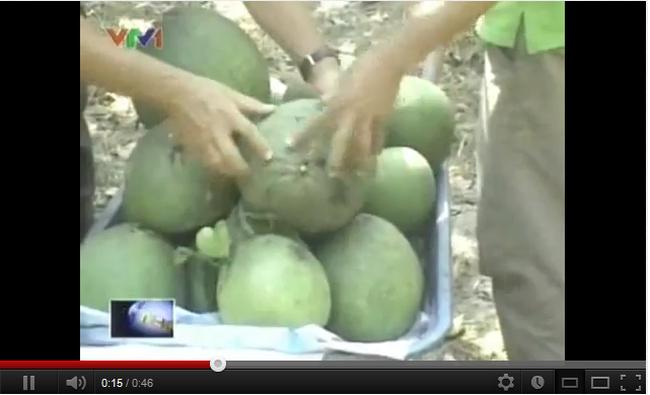 [Video] Châu Âu cảnh báo về rau, quả Việt Nam