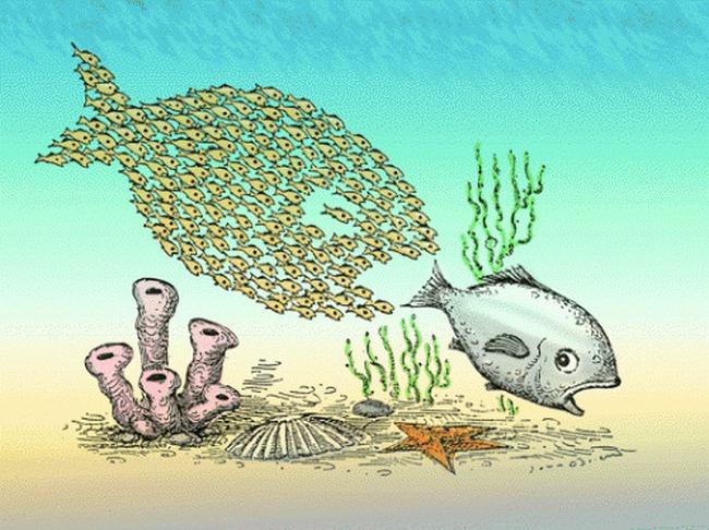 Thâu tóm DN: Khi đối tác tốt trở thành cá mập