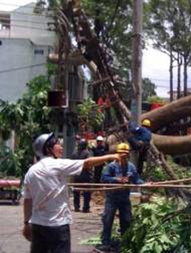 Điện lực TP HCM thiệt hại gần 2,6 tỷ đồng vì bão Pakhar