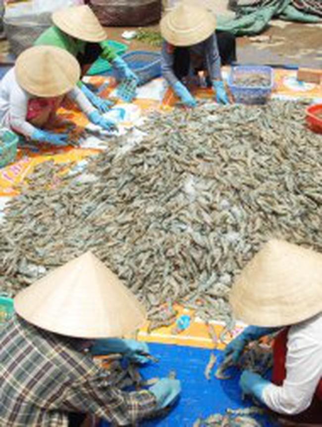 Ngành thủy sản lo vỡ nợ: Bên bờ phá sản