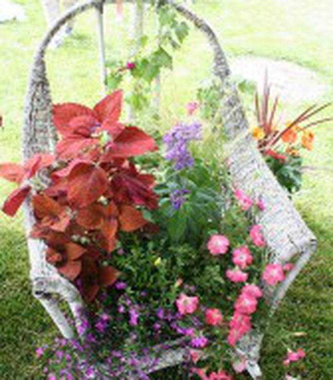 Làm vườn mini từ ghế cũ