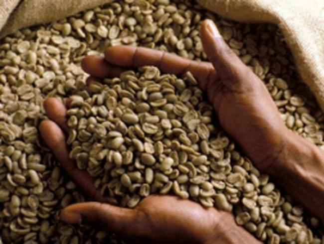 Cung cà phê của Braxin ra thị trường thấp nhất 4 năm