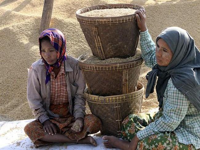 Myanmar đặt mục tiêu xuất khẩu một triệu tấn gạo