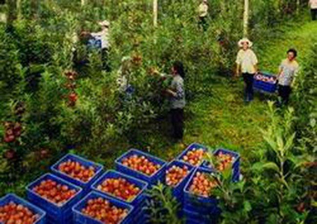 Hạn chế tối đa quy hoạch lấy đất nông nghiệp