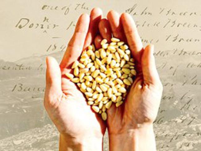 Giá lương thực tăng trở thành thảm họa nhân đạo