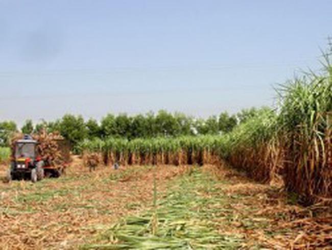 VCSC nhận định SBT sẽ đạt 510 tỷ đồng lợi nhuận ròng năm 2012