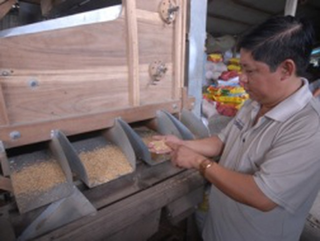 Một nông dân xuất khẩu... 1.000 tấn lúa giống/năm