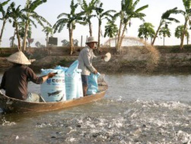 Doanh nghiệp xuất khẩu cá tra: Mong ngân hàng ngồi cùng thuyền