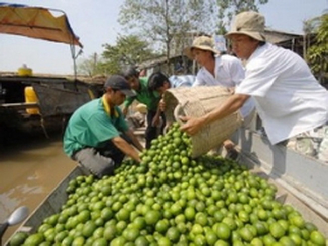 Nghệ An: Giá chanh cao kỷ lục 60.000 đồng/kg