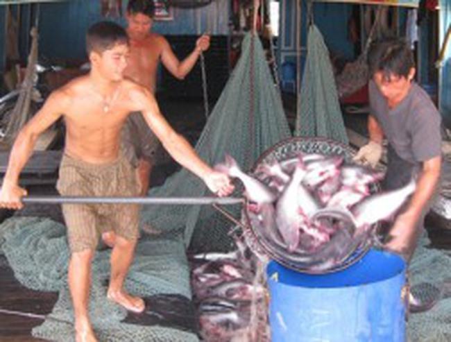 Cảnh báo việc giảm giá xuất khẩu cá tra