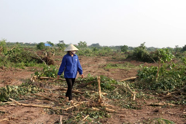 20 người bị tạm giữ trong vụ cưỡng chế thu hồi đất cho dự án Ecopark