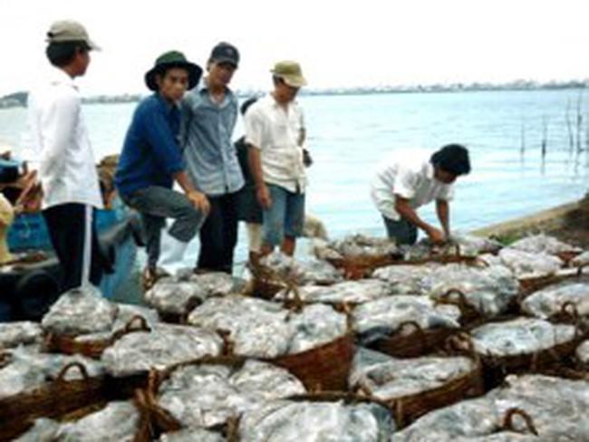 Thương lái Trung Quốc 'khuynh đảo' thị trường nguyên liệu hải sản
