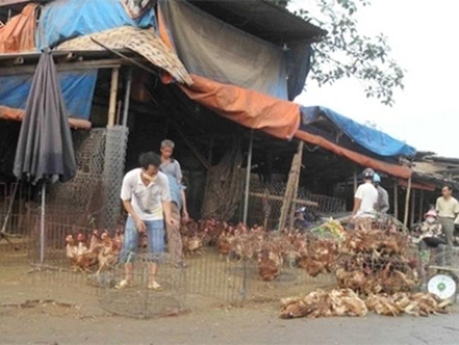 """[Video] """"Nghênh ngang"""" như gà thải Trung Quốc ở Hà Nội"""