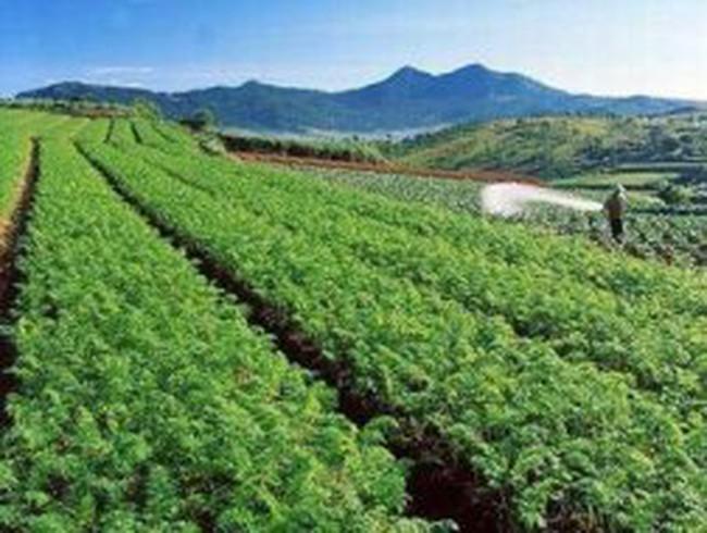 Nông nghiệp công nghệ cao: Những chuyện cười ra nước mắt