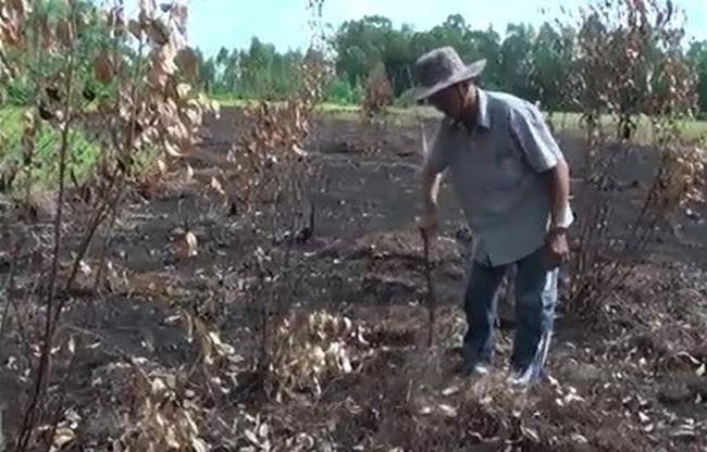 [Video] Lay lắt ở vùng đất chết chờ khu công nghiệp