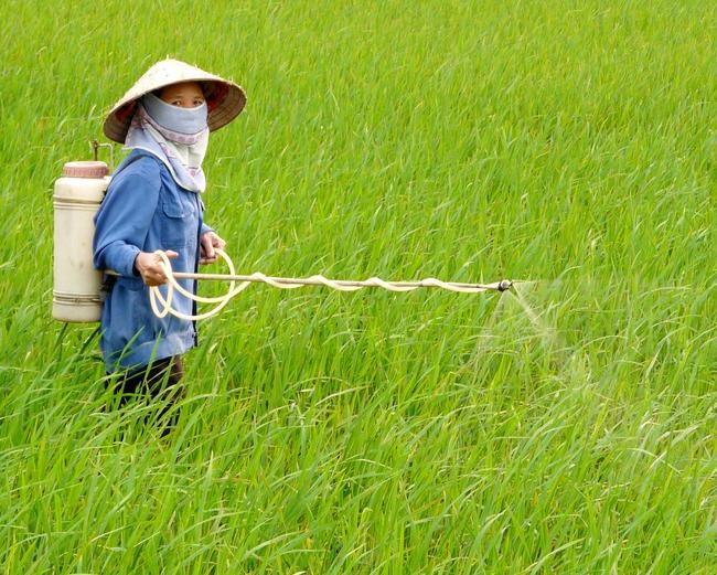 Sản xuất thuốc Bảo vệ thực vật trong nước mới dừng lại ở mức...sang chiết và đóng chai