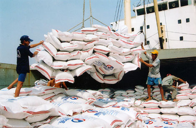 Xuất khẩu gạo giảm do giá thấp