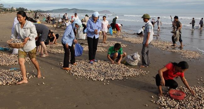 EU ngừng nhập một số loại sò điệp, sò lông từ Việt Nam