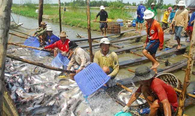 Đến nửa đầu tháng 8, xuất khẩu thủy sản tăng hơn 23% đạt 4,67 tỷ USD