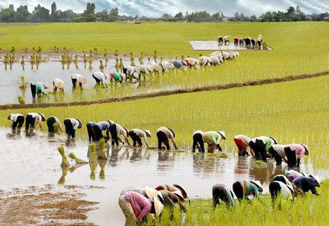 10 tháng đầu năm tăng trưởng tín dụng khu vực nông nghiệp đạt 8,2%