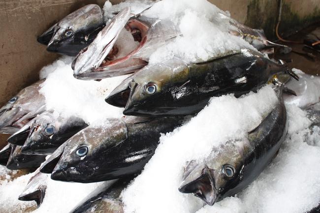 Tháng 10 xuất khẩu cá ngừ tăng mạnh 16,9%