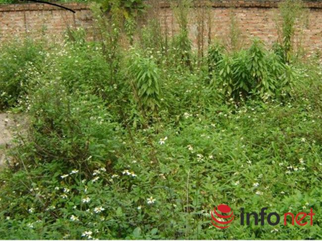 Hà Nội: Đất thổ cư ngoại thành lại đông khách