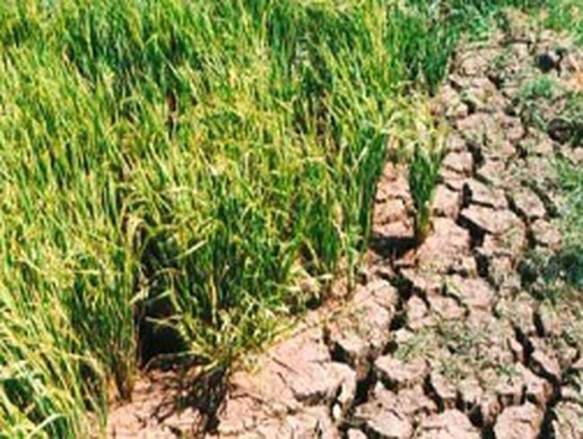 Hạn hán đã gây thiệt hại hơn 1.000 tỷ đồng