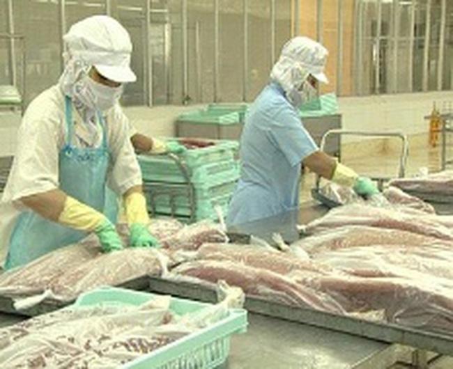 Nâng cao chất lượng để tăng xuất khẩu cá ngừ
