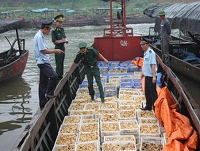 Lại bắt giữ thêm 40.000 con gà giống nhập lậu tại Quảng Ninh