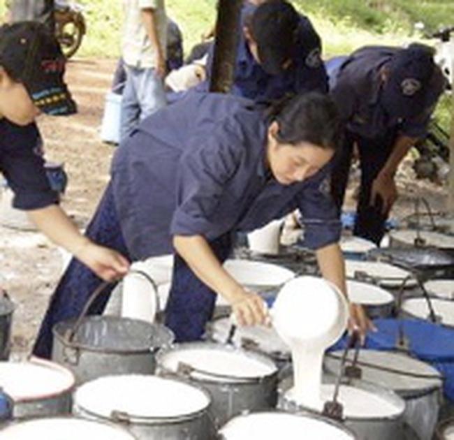 Thu mua 6.000 tấn mủ cao su ở tỉnh Bình Dương