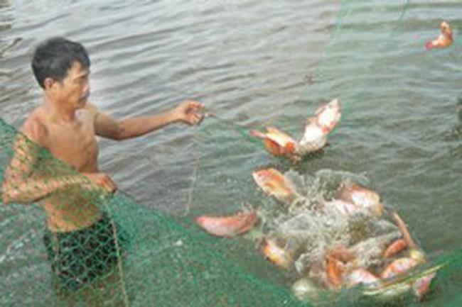 Thủy, hải sản khan hàng, giá tăng mạnh